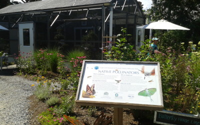Museum of Natural History: Pollinator Path
