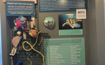 Shark Center Environmental Stewardship Exhibit-Atlantic White Shark Conservancy